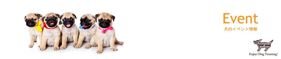 event(犬のイベント情報)