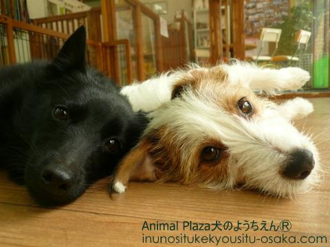 Wごろん_犬のようちえんⓇ_大阪堀江教室