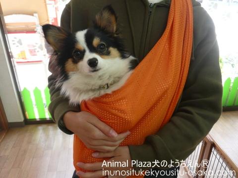くぅスリング_犬のようちえんⓇ_大阪堀江教室
