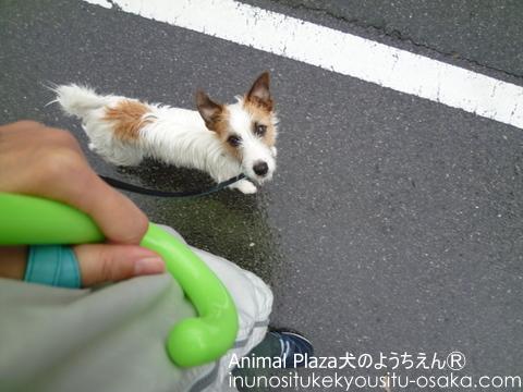じゃん雨散歩_犬のようちえんⓇ_大阪堀江教室