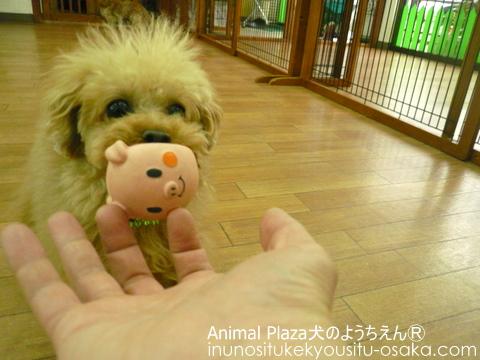 アドニスおもちゃ_犬のようちえんⓇ_大阪堀江教室