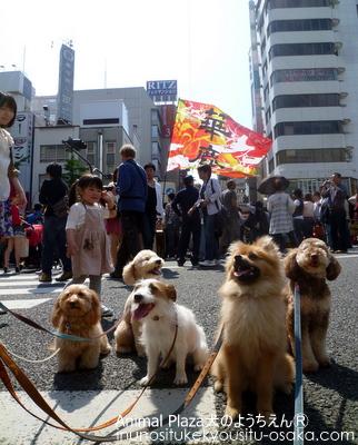 オープンフェスタ_犬のようちえんⓇ_大阪堀江教室