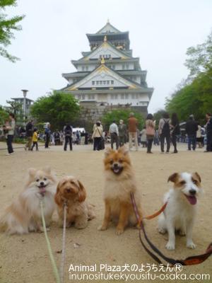 大阪城503_犬のようちえんⓇ_大阪堀江教室