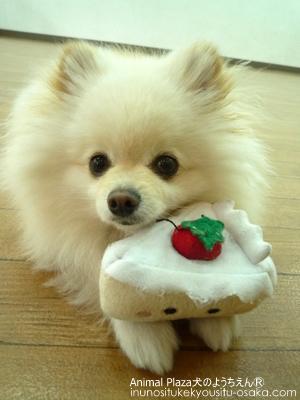 志おもちゃ_犬のようちえんⓇ_大阪堀江教室