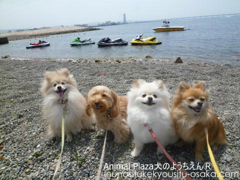 水上バイク_犬のようちえんⓇ_大阪堀江教室