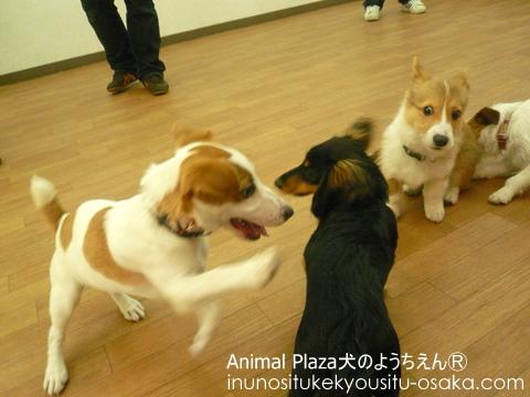 PP遊び_犬のようちえんⓇ_大阪堀江教室