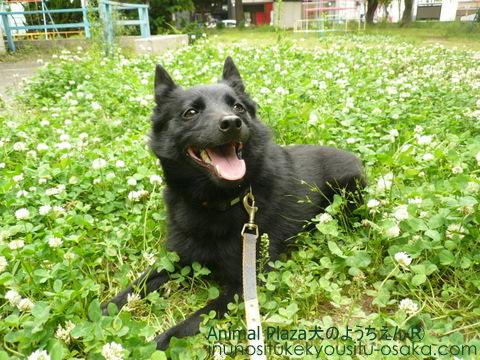 まぐろスマイル_犬のようちえんⓇ_大阪堀江教室