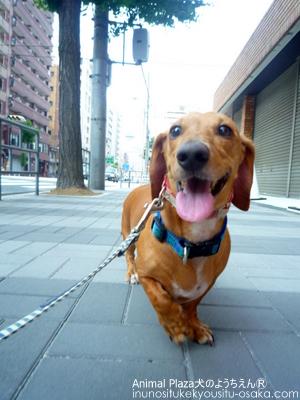 コロスマイル_犬のようちえんⓇ_大阪堀江教室