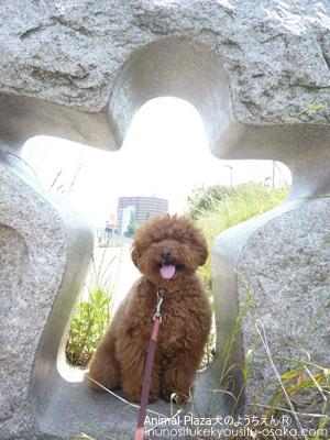 トゥトゥスマイル_犬のようちえんⓇ_大阪堀江教室