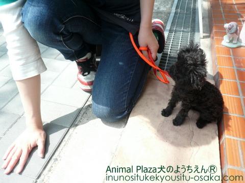 ラビアン散歩1_犬のようちえんⓇ_大阪堀江教室