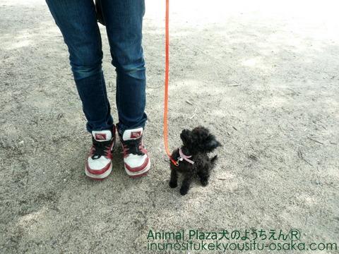 ラビアン散歩2_犬のようちえんⓇ_大阪堀江教室