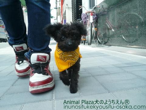 ラビアン散歩3_犬のようちえんⓇ_大阪堀江教室
