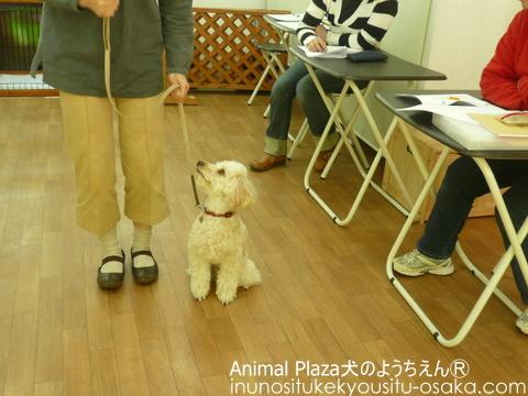 ラピスクーリング_犬のようちえんⓇ_大阪堀江教室