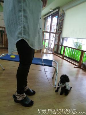 PP619 (3)_犬のようちえんⓇ_大阪堀江教室