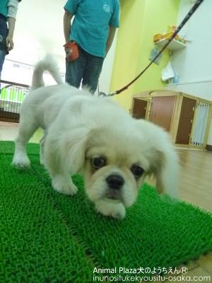 PP619 (4)_犬のようちえんⓇ_大阪堀江教室