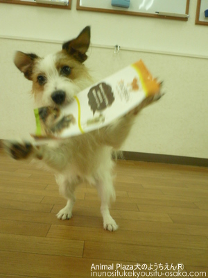 DTM _犬のようちえんⓇ_大阪堀江教室 (3)