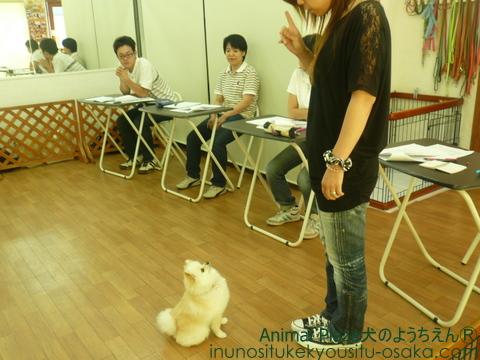 スクーリング07 _犬のようちえんⓇ_大阪堀江教室 (1)