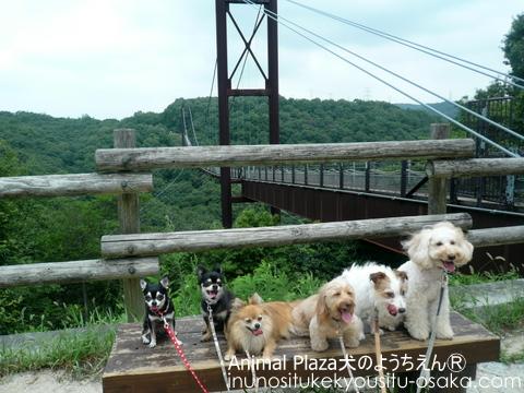 夏_犬のようちえんⓇ_大阪堀江教室 (7)