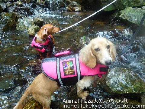 731川遊びイベント_犬のようちえんⓇ_大阪堀江教室 (7)