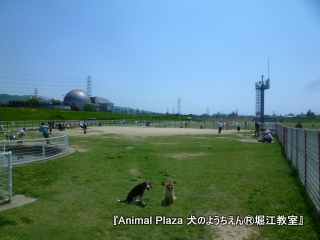 2012GW_犬のようちえん堀江教室 (1)