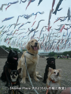 2012GW_犬のようちえん堀江教室 (3)