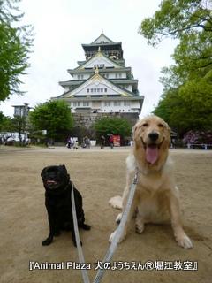 2012GW_犬のようちえん堀江教室 (4)
