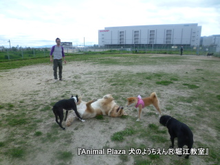 2012GW_犬のようちえん堀江教室 (6)