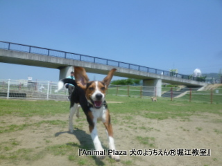 2012GW_犬のようちえん堀江教室 (8)