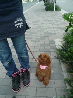 めいちゃん散歩_犬のようちえんⓇ_大阪堀江教室