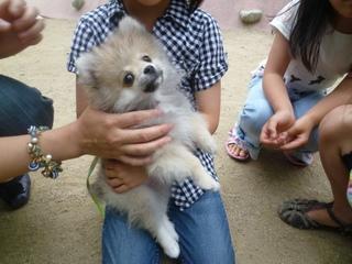 ららくん子供_犬のようちえんⓇ_大阪堀江教室