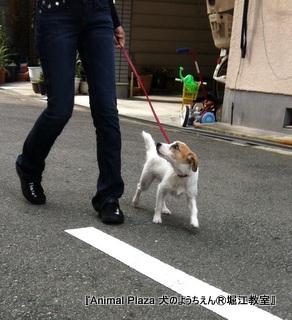 ユーニちゃん:『お散歩レッスン』