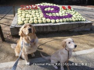 2013年正月犬のようちえん®堀江教室 (1)