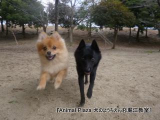 2013年正月犬のようちえん®堀江教室 (10)