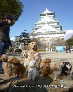 2013年正月犬のようちえん®堀江教室 (11)