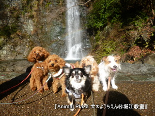 2013年正月犬のようちえん®堀江教室 (12)