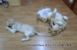 2013年正月犬のようちえん®堀江教室 (2)