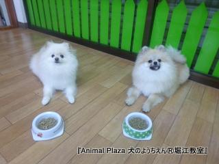 2013年正月犬のようちえん®堀江教室 (3)