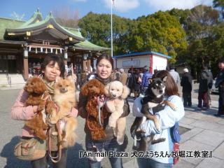 2013年正月犬のようちえん®堀江教室 (5)
