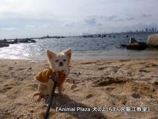 2013年正月犬のようちえん®堀江教室 (7)
