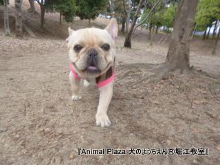 2013年正月犬のようちえん®堀江教室 (9)