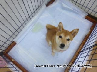20130211堀江_犬のようちえん® (1)