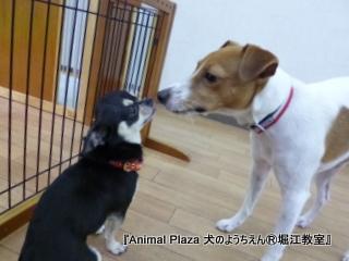 ココちゃん&わんくん