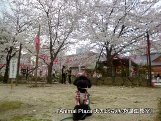黒丸くん in 土佐神社