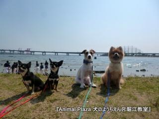 夏目前の甲子園浜