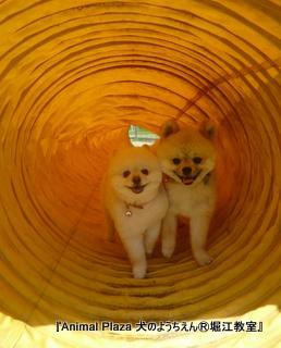 仲良しトンネル♪♪