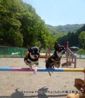 息の合ったジャンプ!!