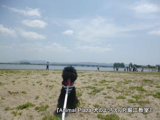 琵琶湖広いねぇ~!