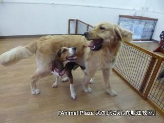 子犬の頃より仲良し度はアップしているかも(≧∇≦)