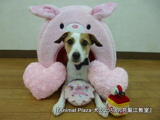 ユーニちゃん 2歳☆