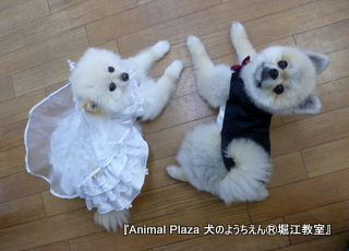 志ちゃん&羅々くんはタキシードとウエディングドレスで♪